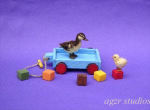 Ooak 1:12 dollhouse miniature mallard duckling & chick