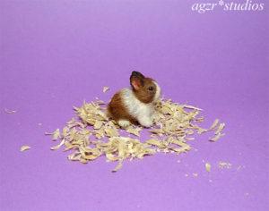 1:12 furred miniature dutch baby bunny